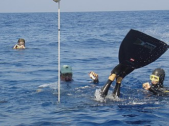 Monofin - Herbert Nitsch wearing a monofin at the Cyprus BIOS 2004 Freediving Open Classic