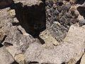 Herculaneum — Casa dell'Albergo (14732535479).jpg