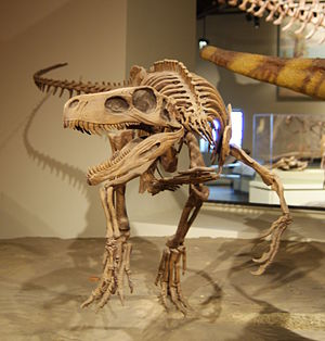 Herrerasaurus - Mounted skeleton cast, Field Museum