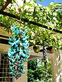 Hoa móng cọp xanh.jpg
