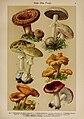 Hoffmann-Dennert botanischer Bilderatlas (Taf. 06) (6424984461).jpg
