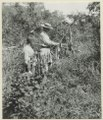 Hofsten och Calle hänga upp preparerade fågelskinn till torkning. Lägret vid Tataranda. Gran Chaco - SMVK - 0702.0023.tif