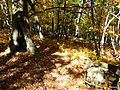 Hole-tree-trail-in-the-forest - West Virginia - ForestWander.jpg