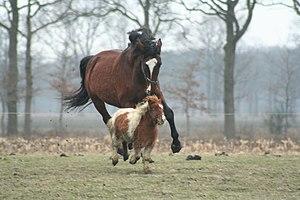 Mirvahedy v Henley - Image: Horse and pony