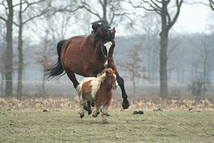 A Large Brown Horse Is Chasing Small In Pasture
