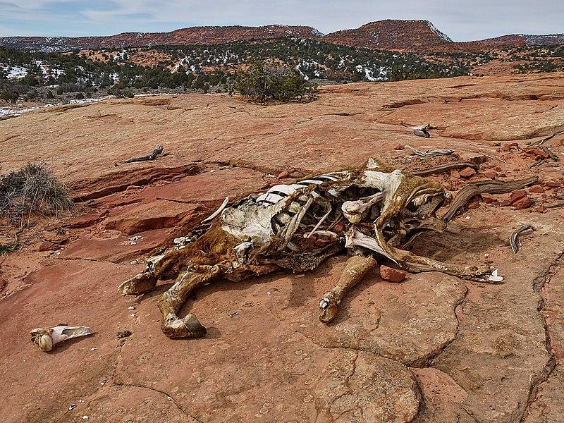 File:Horse carcass - Moccasin Mountain Dinosaur Tracksite.JPG