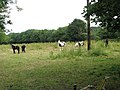 Horses grazing in pasture - geograph.org.uk - 1384259.jpg