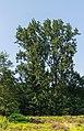 Hortus Haren d.j.b 17.jpg