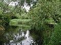 Howden Marsh - geograph.org.uk - 472851.jpg