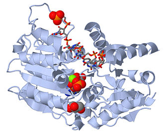 Helicase - Human DEAD-box RNA helicase