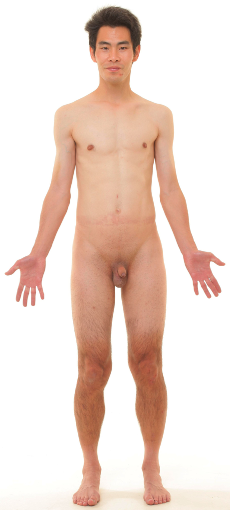 Apologise, Nude male model full body