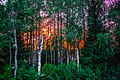 IMG 7930 Ii, Finland (9358814933).jpg