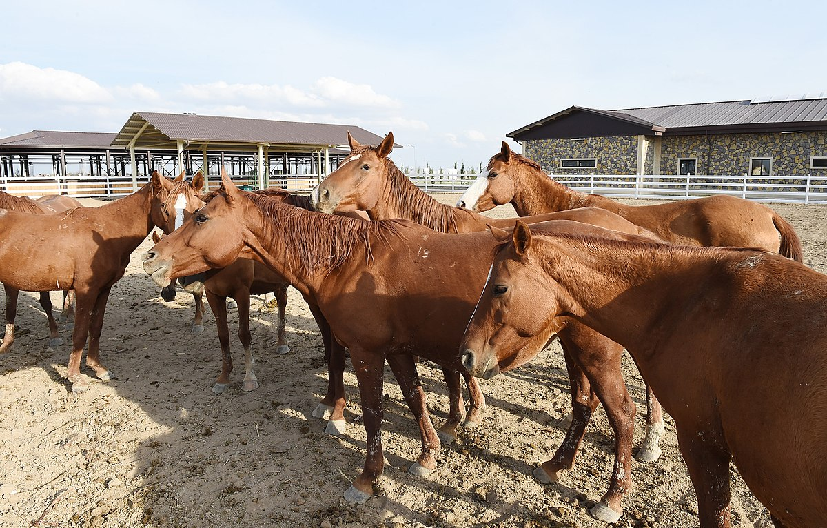 Ilham Aliyev attended opening of Qarabag Equestrian Complex 13.jpg