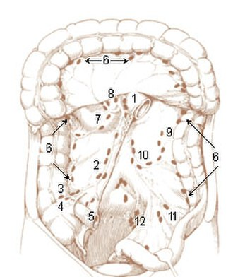 Inferior mesenteric lymph nodes - Image: Illu lymph chain 09