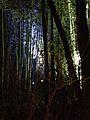 Illuminated Sagano bamboo forest 4.jpg