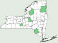 Impatiens glandulifera NY-dist-map.png