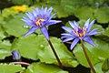 In Nationale Plantentuin van België Jardin Botanique (5771612554).jpg