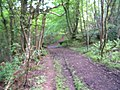 In the woods - geograph.org.uk - 457388.jpg