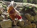 Inca trail companions (6075100353).jpg