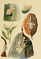 Indian insect life (Plate LXXXII) (6280048546).jpg