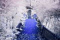 Infrared Nature Detail Lilie (225699431).jpeg