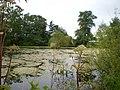 Inland Pool, Wrottesley Park - geograph.org.uk - 1420578.jpg