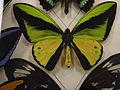Insect Safari - lepidopteran 045.jpg