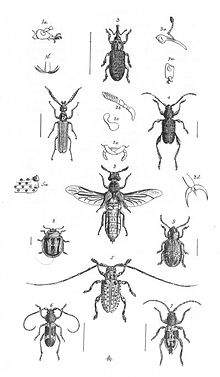Insects Plate 2 (Discoveries in Australia).jpg
