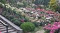 Int. Rose Test Garden, PDX, 2017 - 6.jpg