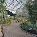 Interieur, overzicht van het centrale gedeelte van de tropische kas - Haren - 20334344 - RCE.jpg