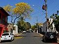 Ipê Amarelo (Tabebuia serratifolia) em frente a sede da OAB de Guariba na Avenida Antônio Albino. - panoramio (1).jpg