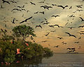 Isla Pajaros Arriaga Web.jpg