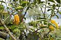 Isole Brissago 16 apr 2016 3740.jpg