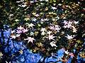 Japan Autumn Colors Momiji Pond (61874881).jpeg