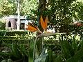 Jardim Zoologico - panoramio.jpg
