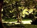 Jardin luxembourg.jpg