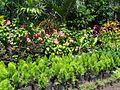 Jardines en catarina.jpg