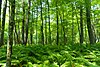 Jay Creek Pine Forest.jpg