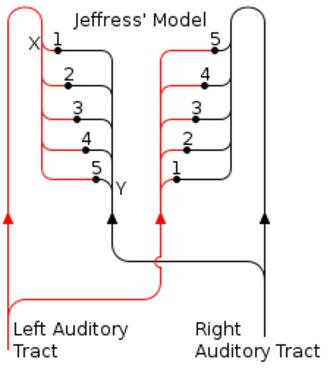 Coincidence detection in neurobiology - Fig. 2: If a sound arrives at the left ear before the right ear, the impulse in the left auditory tract will reach X sooner than the impulse in the right auditory tract reaches Y. Neurons 4 or 5 may therefore receive coincident inputs.