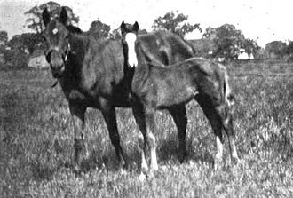 Humorist (horse) - Humorist as a foal in 1918 with his dam, Jest.