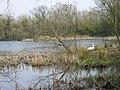 Joe's Pond Rainton Meadows Nature Reserve - geograph.org.uk - 156950.jpg