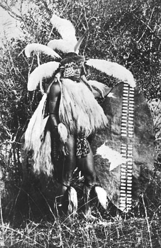Impi - Zulu warrior in full regimental regalia, carrying the large isihlangu war shield. c. 1860. The upper body is covered in cow tails, the kilt is of spotted cat, genet or civet skin and the shins are decorated with cowtails. The elaborate headdress consists of a browband and face-framing flaps of leopard skin with another band of otter skin above. There are multiple ostrich feather plumes and a single upright crane's feather.