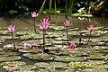 Jurong Bird Park Singapore-021and (2928806952).jpg