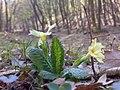 Kab-hegy - virág - panoramio.jpg