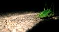 Katydid stepping in (6010976488).png