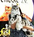 Katze Heimtierausstellung MTV Muenchen Preistraeger 2015-03-30 13-54-36 - 0011.JPG