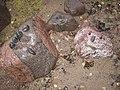Kids had made Faces from Rocks Next to Seashore - panoramio.jpg