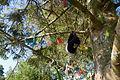 Kildare Brallistown Little St Brigid's Well Rag Tree 2013 09 04.jpg