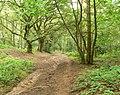Kingsford Forest Park - geograph.org.uk - 495791.jpg