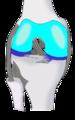 Knee ventral.png